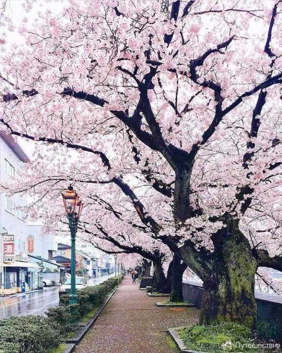 Остров Хонсю, Япония