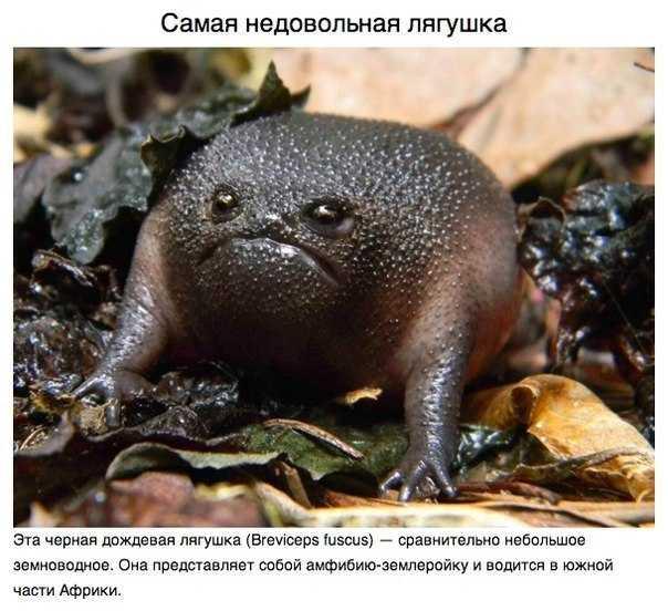 Самая недовольная лягушка