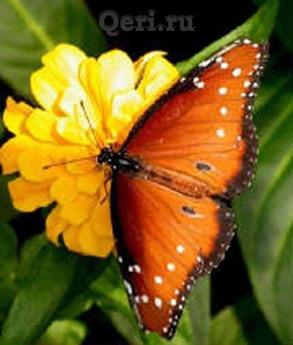 Факты о бабочках