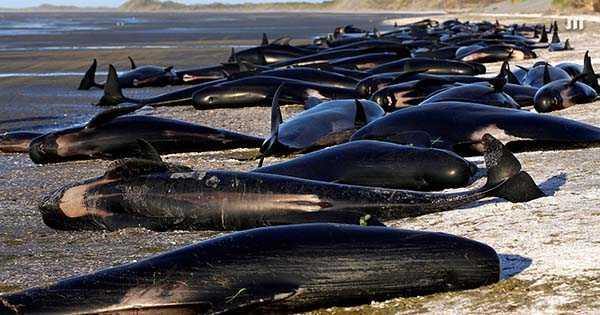 дельфинов выбросило на пляж