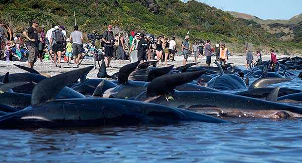 дельфинов выбросило на берег