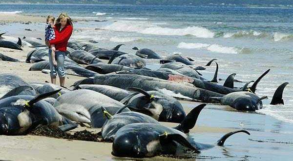 дельфины выбрасываются на берег