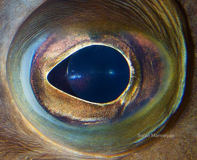глаз ерша