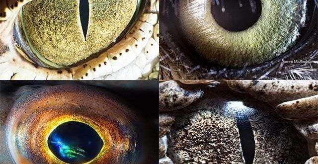 Виды глаз разных животных
