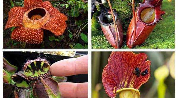 опасные растения-убийцы